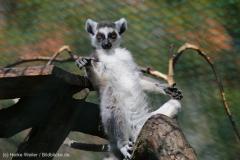 Tierpark_Stroehen_150515_IMG_3675