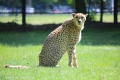 Tierpark_Stroehen_150515_IMG_3706