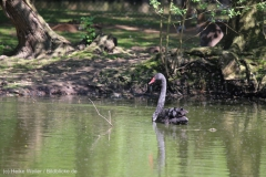 Tierpark_Stroehen_150515_IMG_3732