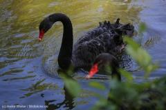 Tierpark_Stroehen_150515_IMG_3746