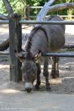 Tierpark_Stroehen_150515_IMG_3747
