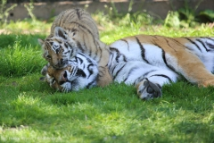 Tierpark_Stroehen_150515_IMG_3761