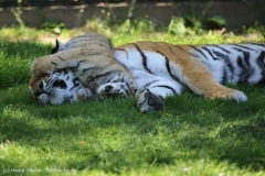 Tierpark_Stroehen_150515_IMG_3764
