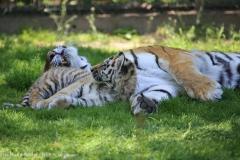 Tierpark_Stroehen_150515_IMG_3765