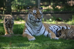 Tierpark_Stroehen_150515_IMG_3814