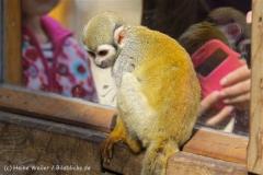 Tierpark_Stroehen_220814_copy_Heike_Weiler_IMG_5791