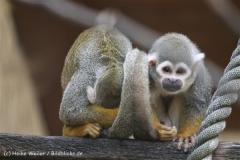 Tierpark_Stroehen_220814_copy_Heike_Weiler_IMG_5798