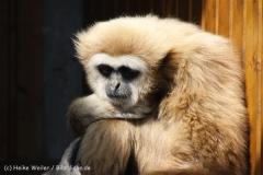 Tierpark_Stroehen_220814_copy_Heike_Weiler_IMG_5805