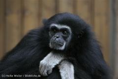 Tierpark_Stroehen_220814_copy_Heike_Weiler_IMG_5807