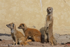 Tierpark_Stroehen_220814_copy_Heike_Weiler_IMG_5830