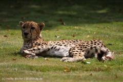 Tierpark_Stroehen_220814_copy_Heike_Weiler_IMG_5836