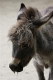 Tierpark_Stroehen_220814_copy_Heike_Weiler_IMG_5854