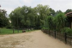 Tierpark_Stroehen_220814_copy_Heike_Weiler_IMG_5857_5503