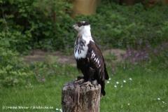 Wildpark-Lueneburg-230510-IMG_1209