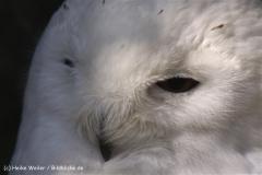 Wildpark-Lueneburg-230510-IMG_1214