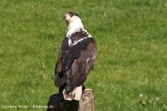 Wildpark-Lueneburg-230510-IMG_1256