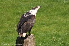 Wildpark-Lueneburg-230510-IMG_1263