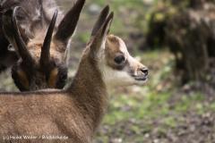 Wildpark-Lueneburg-230510-IMG_1361