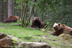 Wildpark-Lueneburg-230510-IMG_1408