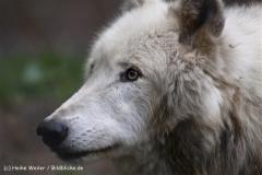 Wildpark-Lueneburg-230510-IMG_1431