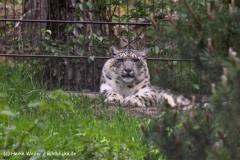 Wildpark-Lueneburg-230510-IMG_1450