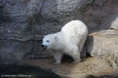 Zoo_Bremerhaven_100516_IMG_1796_1401