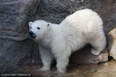 Zoo_Bremerhaven_100516_IMG_1796_1417