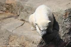 Zoo_Bremerhaven_100516_IMG_1817