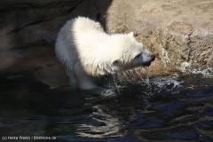 Zoo_Bremerhaven_100516_IMG_1832