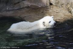 Zoo_Bremerhaven_100516_IMG_1840_1482