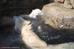 Zoo_Bremerhaven_100516_IMG_1846