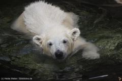 Zoo_Bremerhaven_100516_IMG_1850_1499