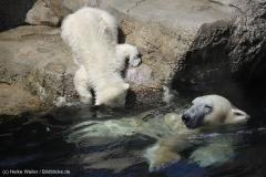 Zoo_Bremerhaven_100516_IMG_1863_1526