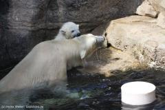 Zoo_Bremerhaven_100516_IMG_1866_1556