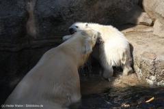 Zoo_Bremerhaven_100516_IMG_1888