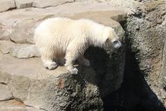 Zoo_Bremerhaven_100516_IMG_1922