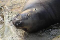Zoo_am_Meer_Bremerhaven_280414_IMG_6888