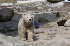 Zoo_am_Meer_Bremerhaven_280414_IMG_6908