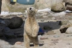 Zoo_am_Meer_Bremerhaven_280414_IMG_6916