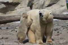 Zoo_am_Meer_Bremerhaven_280414_IMG_6922
