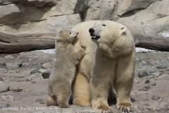 Zoo_am_Meer_Bremerhaven_280414_IMG_6924