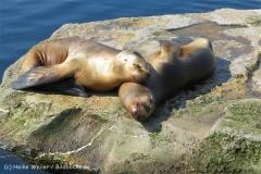 Zoo_am_Meer_Bremerhaven_280414_IMG_6929_4678
