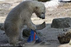 Zoo_am_Meer_Bremerhaven_280414_IMG_6967