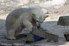 Zoo_am_Meer_Bremerhaven_280414_IMG_6972