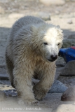 Zoo_am_Meer_Bremerhaven_280414_IMG_6992