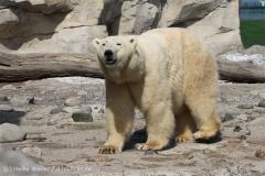 Zoo_am_Meer_Bremerhaven_280414_IMG_7016