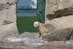 Zoo_am_Meer_Bremerhaven_280414_IMG_7026
