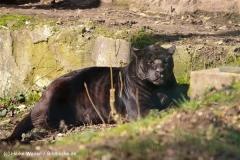 Zoo-Aschersleben-020410IMG_8821