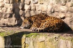 Zoo-Aschersleben-020410IMG_8826