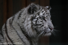 Zoo-Aschersleben-020410IMG_8855